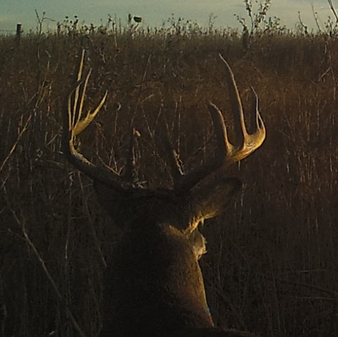 Name:  2019 600 deer3.jpg Views: 619 Size:  68.4 KB