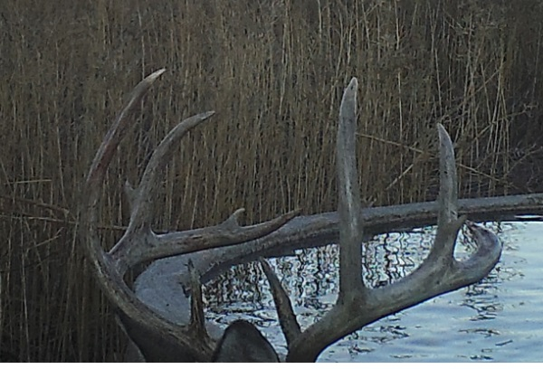 Name:  2019 600 deer4.jpg Views: 599 Size:  98.6 KB