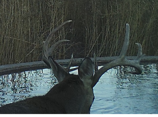 Name:  2019 600 deer5.jpg Views: 596 Size:  81.5 KB