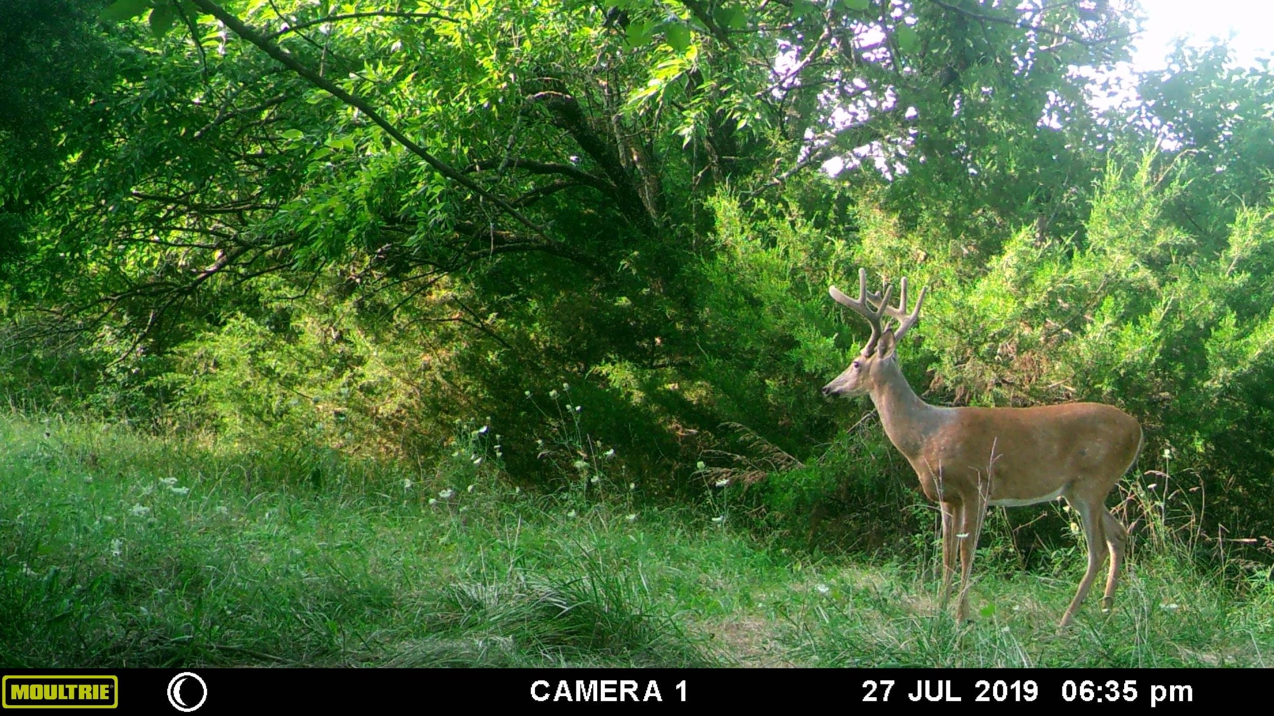 Click image for larger version.   Name:	2019 Buck 2.jpg  Views:	3  Size:	689.6 KB  ID:	6886759
