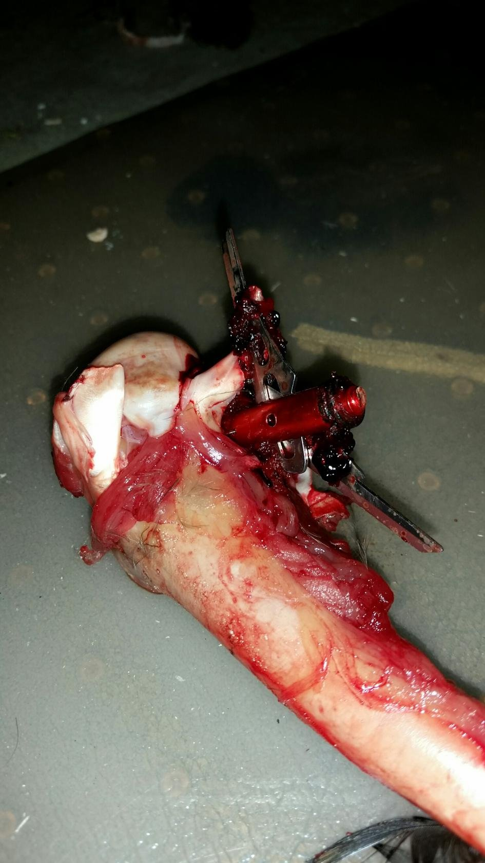 Click image for larger version.   Name:	broadhead left wing.jpg  Views:	N/A  Size:	139.2 KB  ID:	5874321