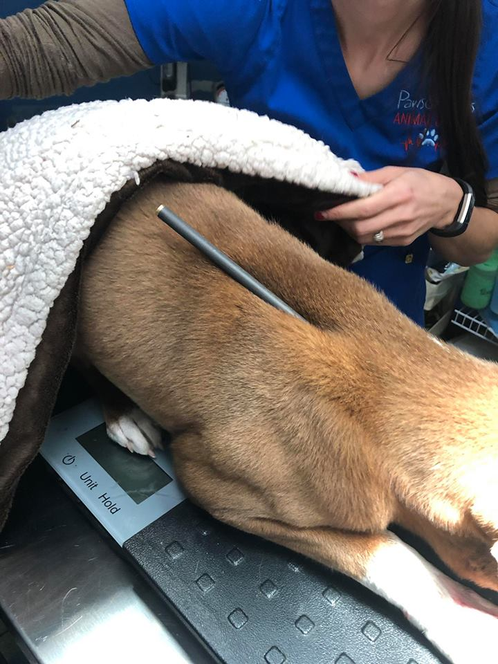 Click image for larger version.  Name:dog2.jpg Views:N/A Size:111.2 KB ID:6725207