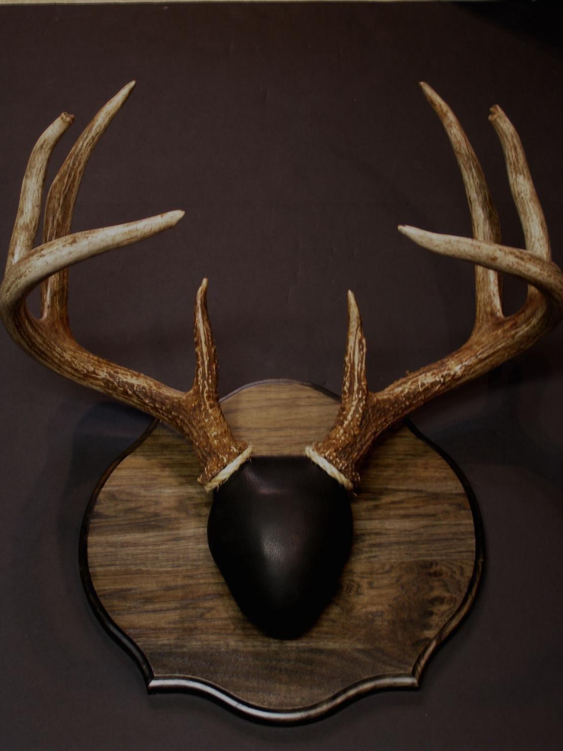 Antler mounting kits that you can do yourself, deer,elk,moose,antelope